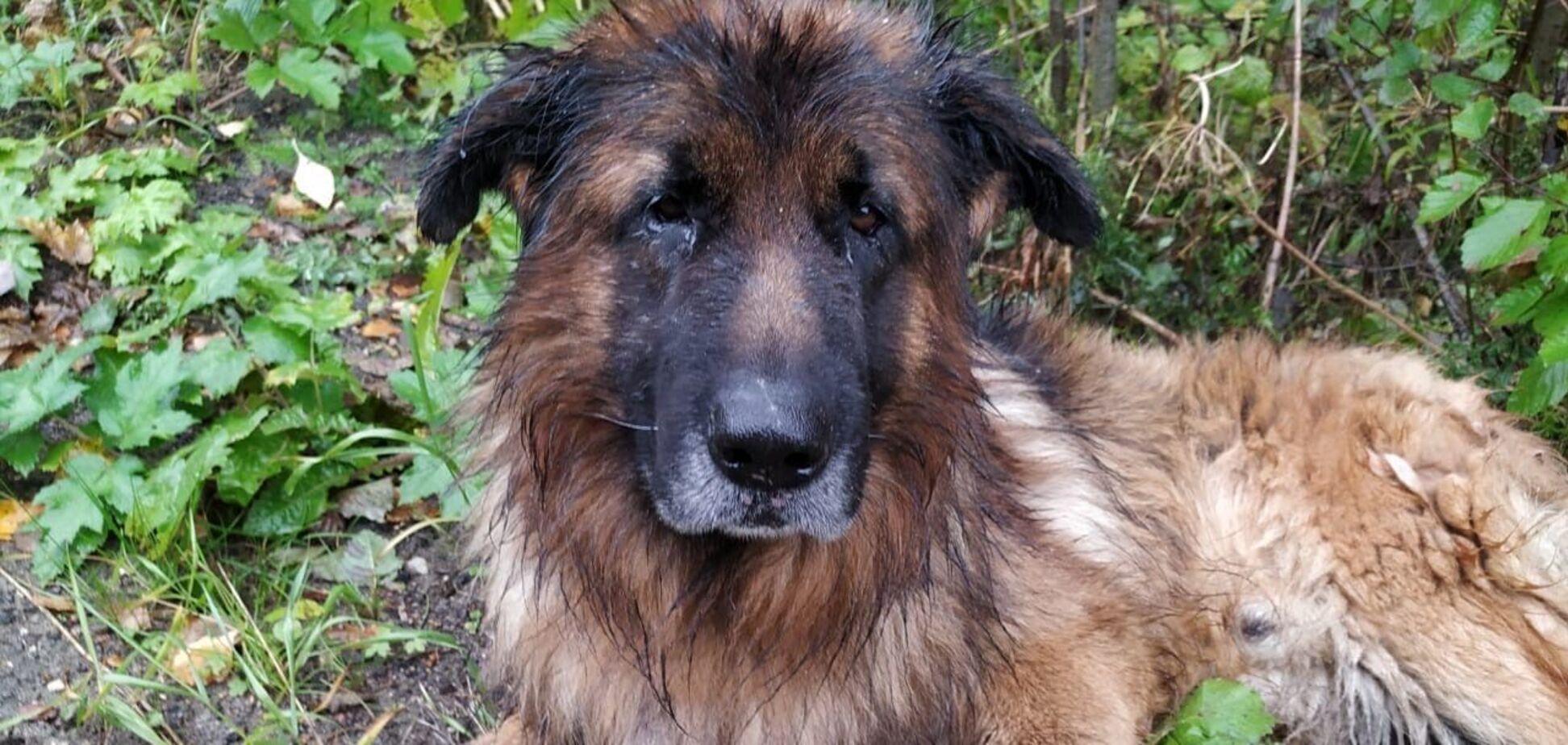 В РФ собака выбралась из могилы