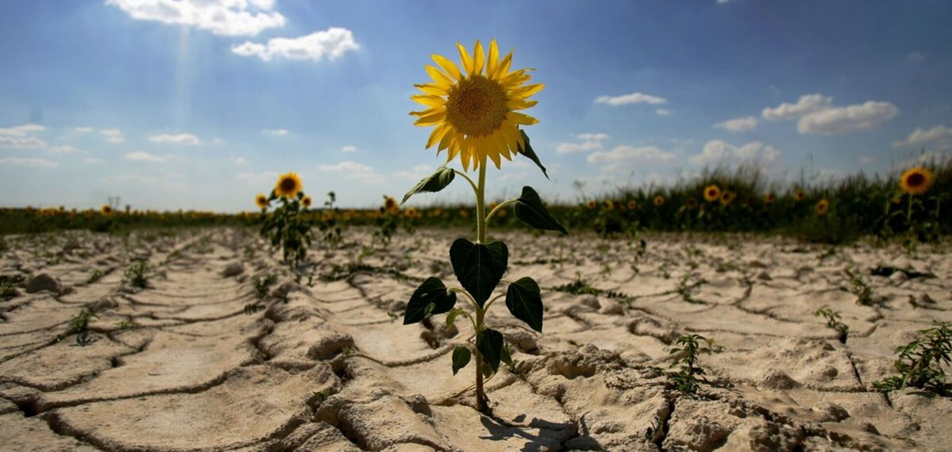 Українці продовжують завдавати шкоди природі