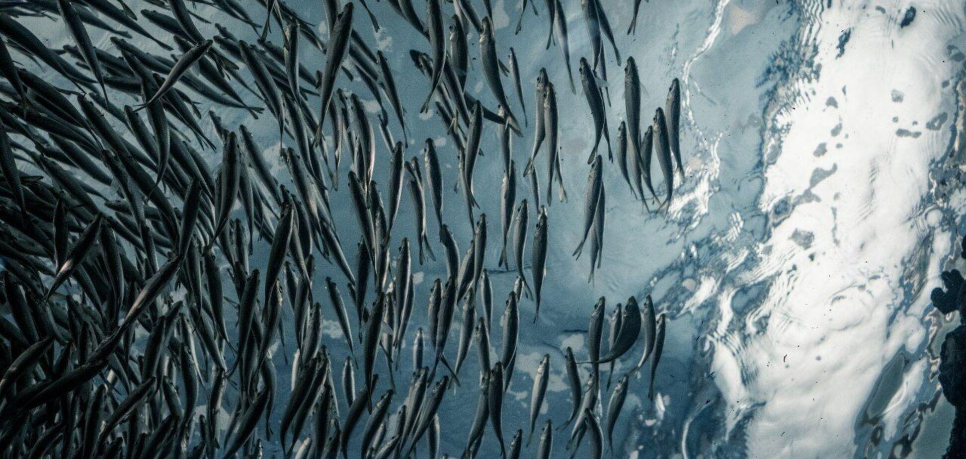Рибні ресурси в Україні скорочуються через низку проблем