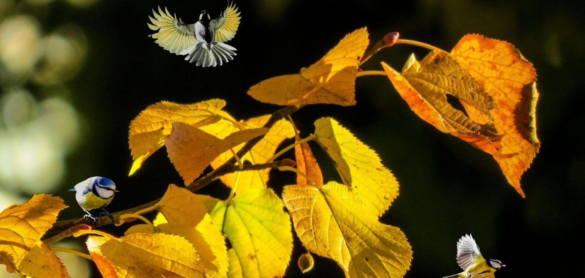Что отмечают 15 ноября: приметы и праздники