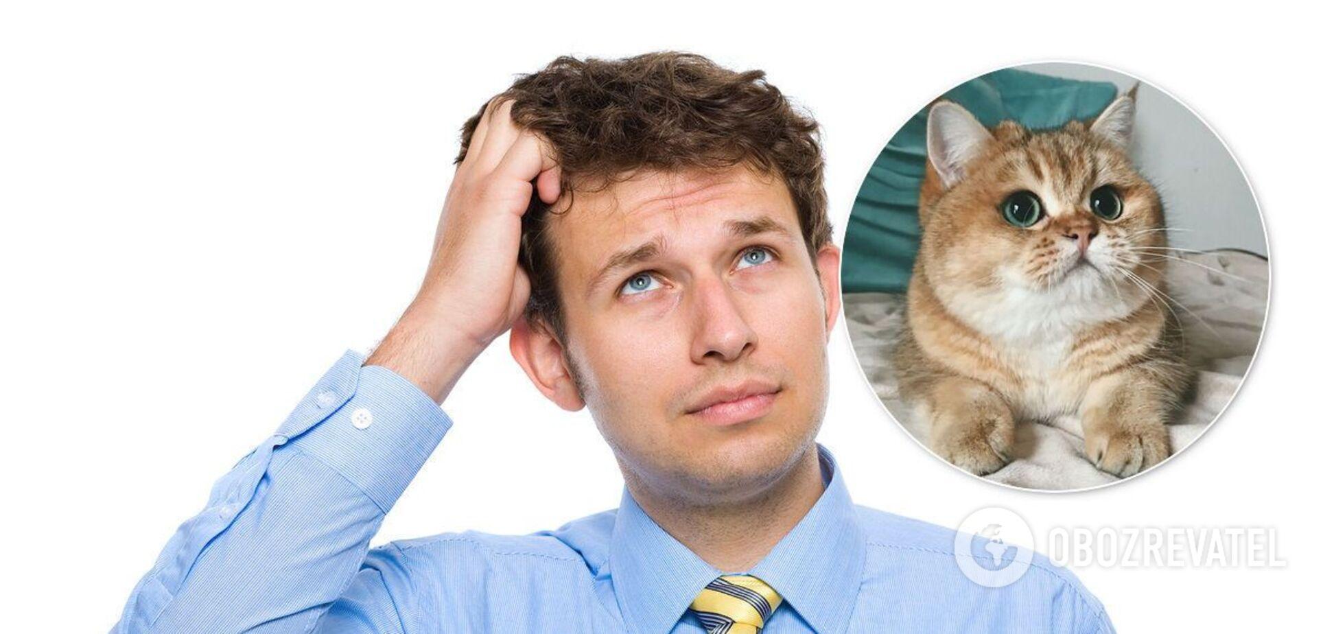 'Знайди кота!' Українців у мережі спантеличила нова оптична ілюзія