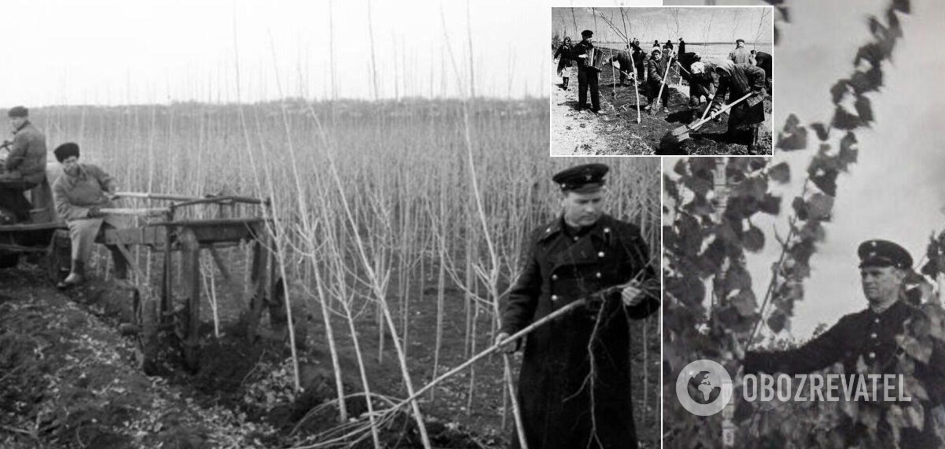 Чому в СРСР всюди висаджували тополі