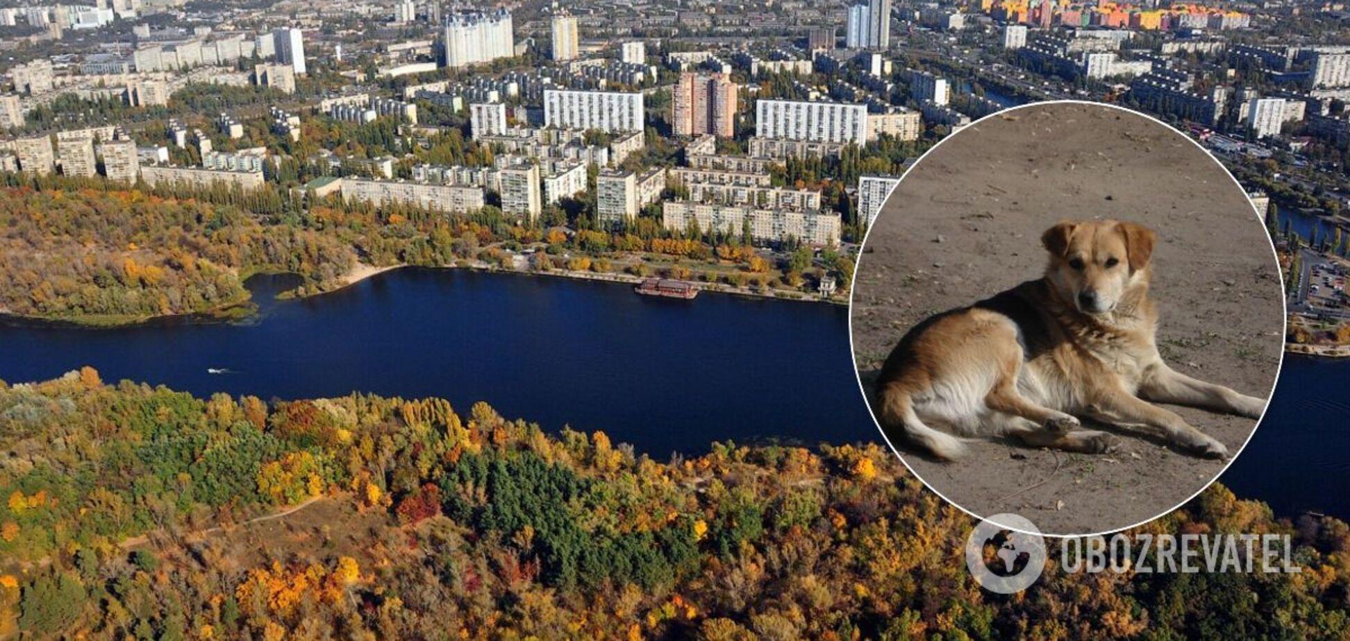У Києві невідомі зарізали собак 'на м'ясо'. Відео 21+