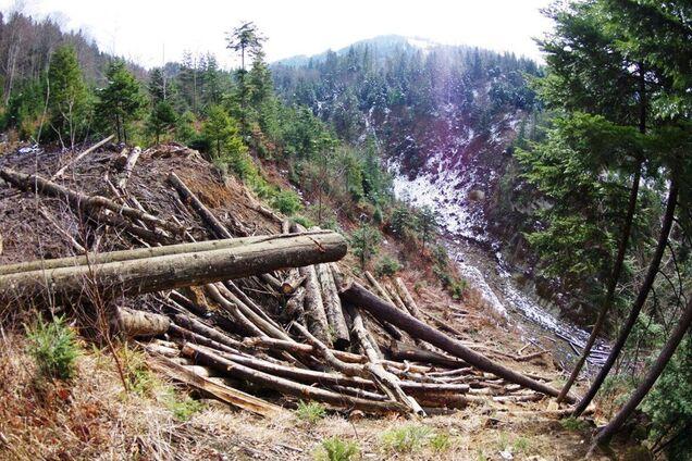 Власть призвали защитить Карпаты от вырубки: Украине может грозить экокатастрофа из-за манипуляций по экологии
