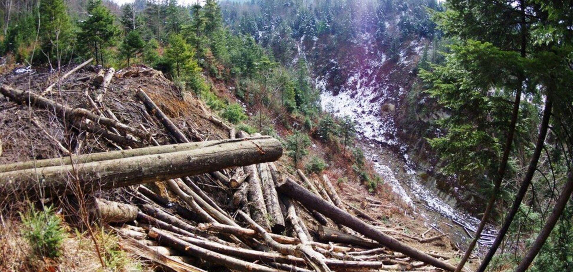 Президента Зеленського попросили зупинити екологічну катастрофу в Карпатах