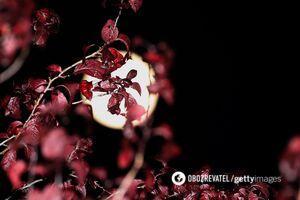 Гороскоп на декабрь для всех знаков по картам Таро: кого ждут перемены