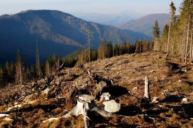 Власти должны сосредоточиться на острых экологических проблемах, а не поддаваться на манипуляции по этой теме – активисты