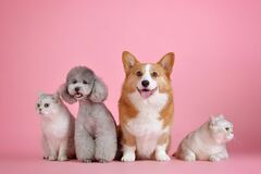 Всесвітній день домашніх тварин відзначається з 1931 року