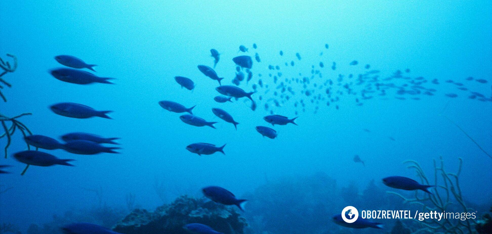 На глибині океану знайшли новий вид хижих тварин. Відео