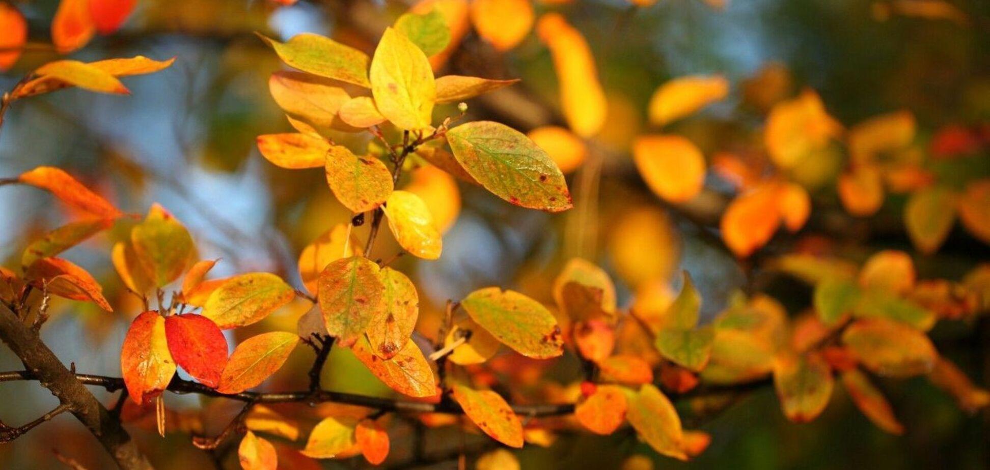 Что отмечают 8 ноября: приметы и праздники