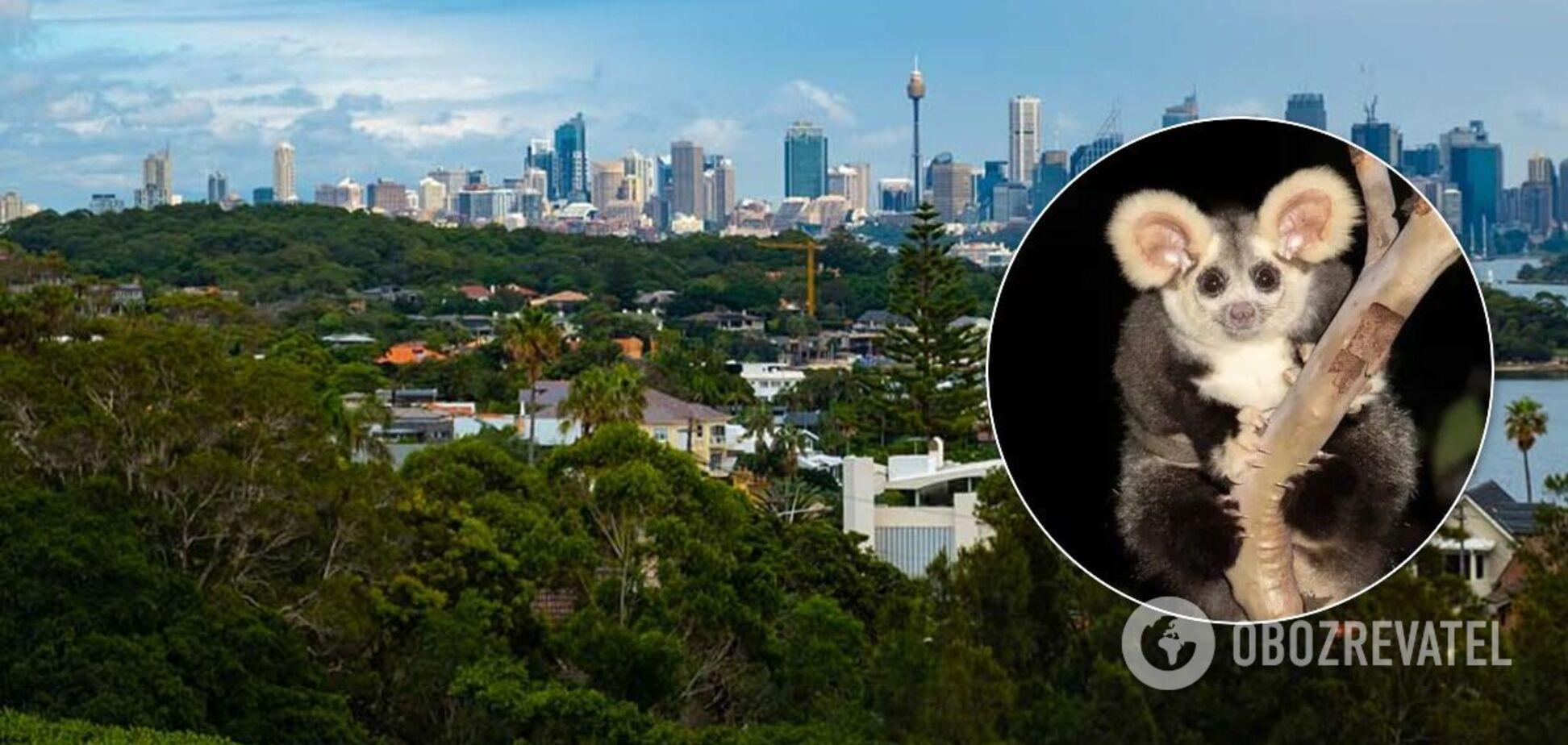 В Австралии найдены новые виды животных. Фото