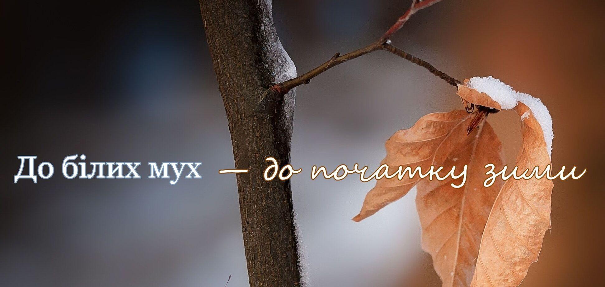 Мова зимова: рідковживані українські слова й типові помилки