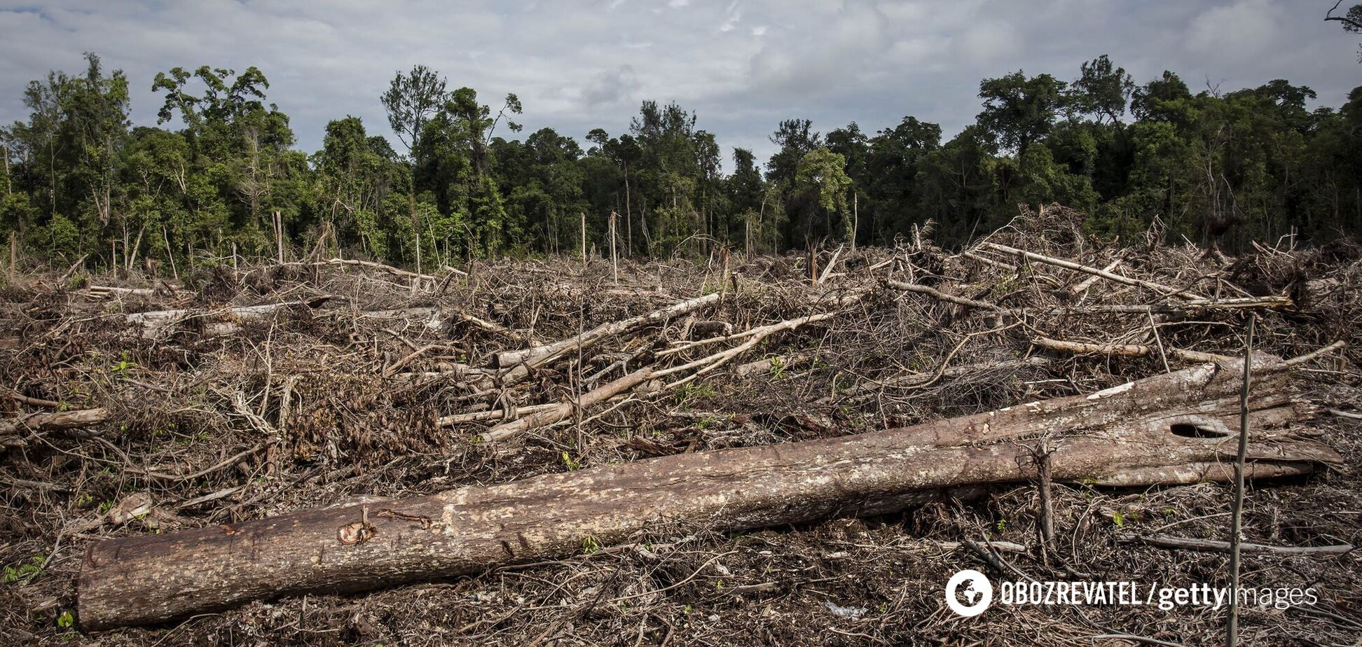 В Украине незаконная вырубка лесов выросла в семь раз: эксперты объяснили, в чем проблема