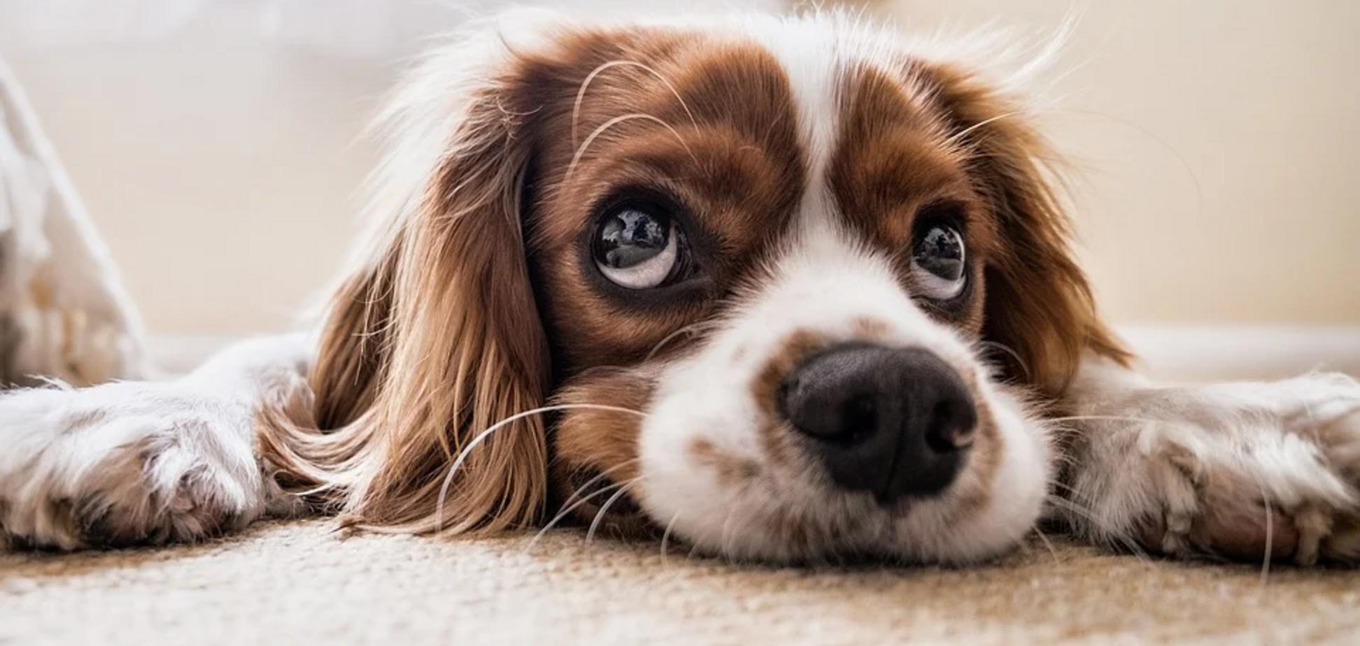 Глаза собак изменились после приручения человеком