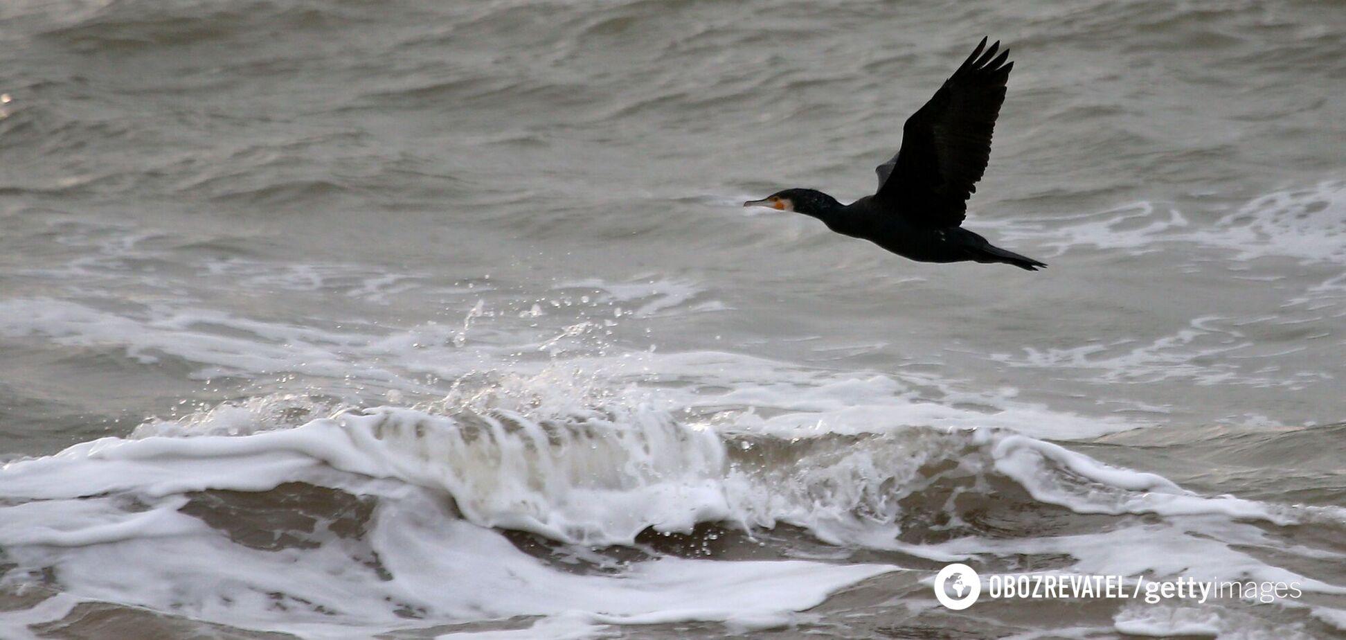 Чи здолає кіборг 'потьомкінські села' Державної морської політики?