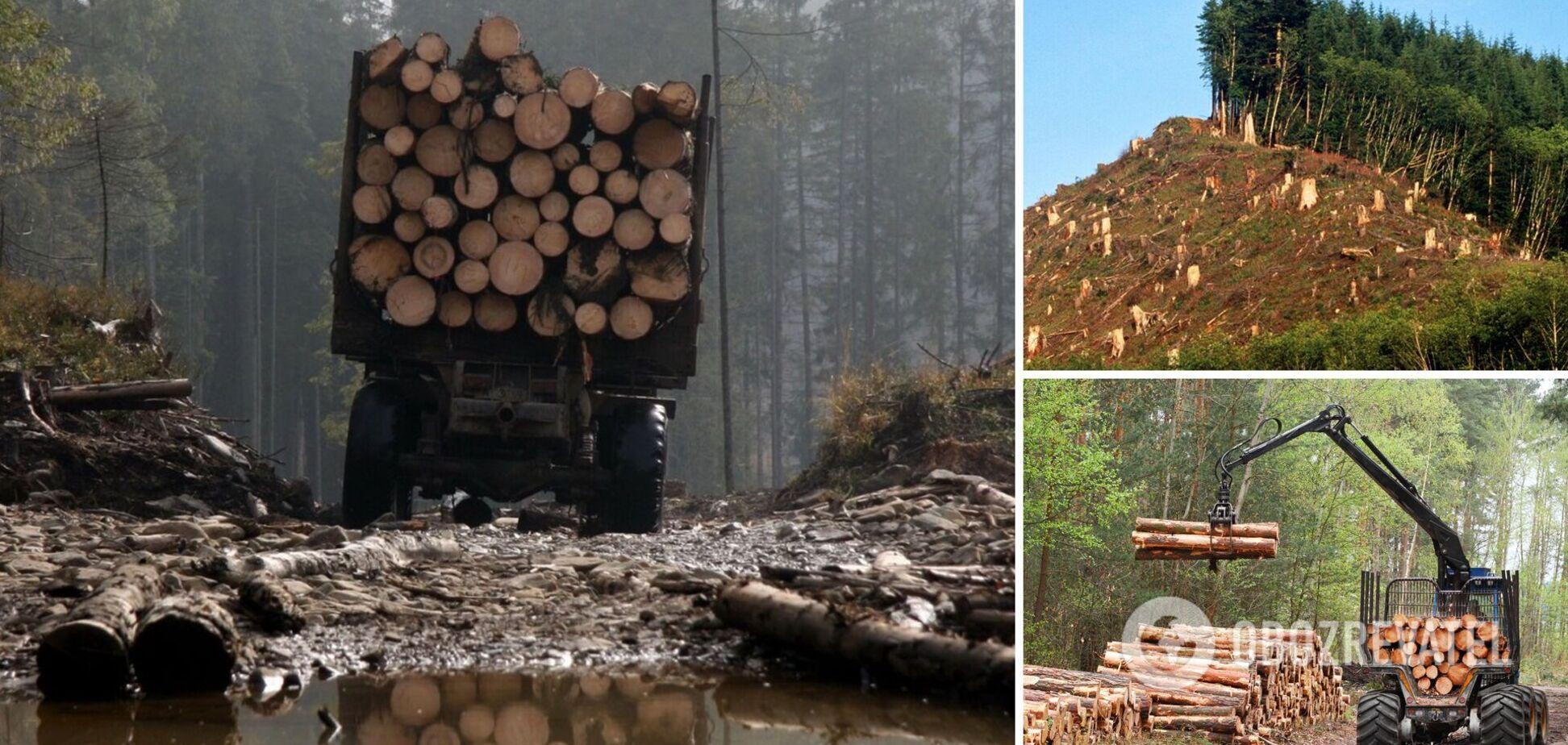 ЕС требует украинский лес: какое на самом деле решение принял арбитраж и что дальше