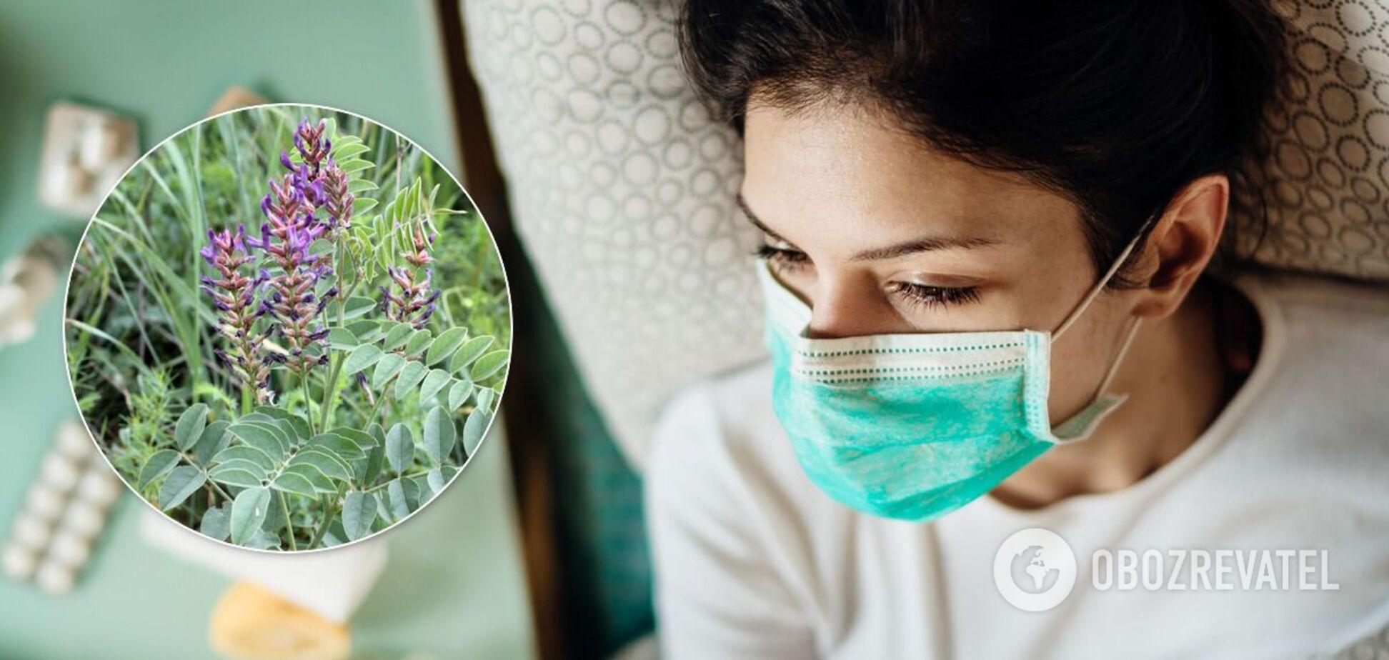 Президента Туркменістану висміяли за ідею лікувати COVID-19 коренем солодки