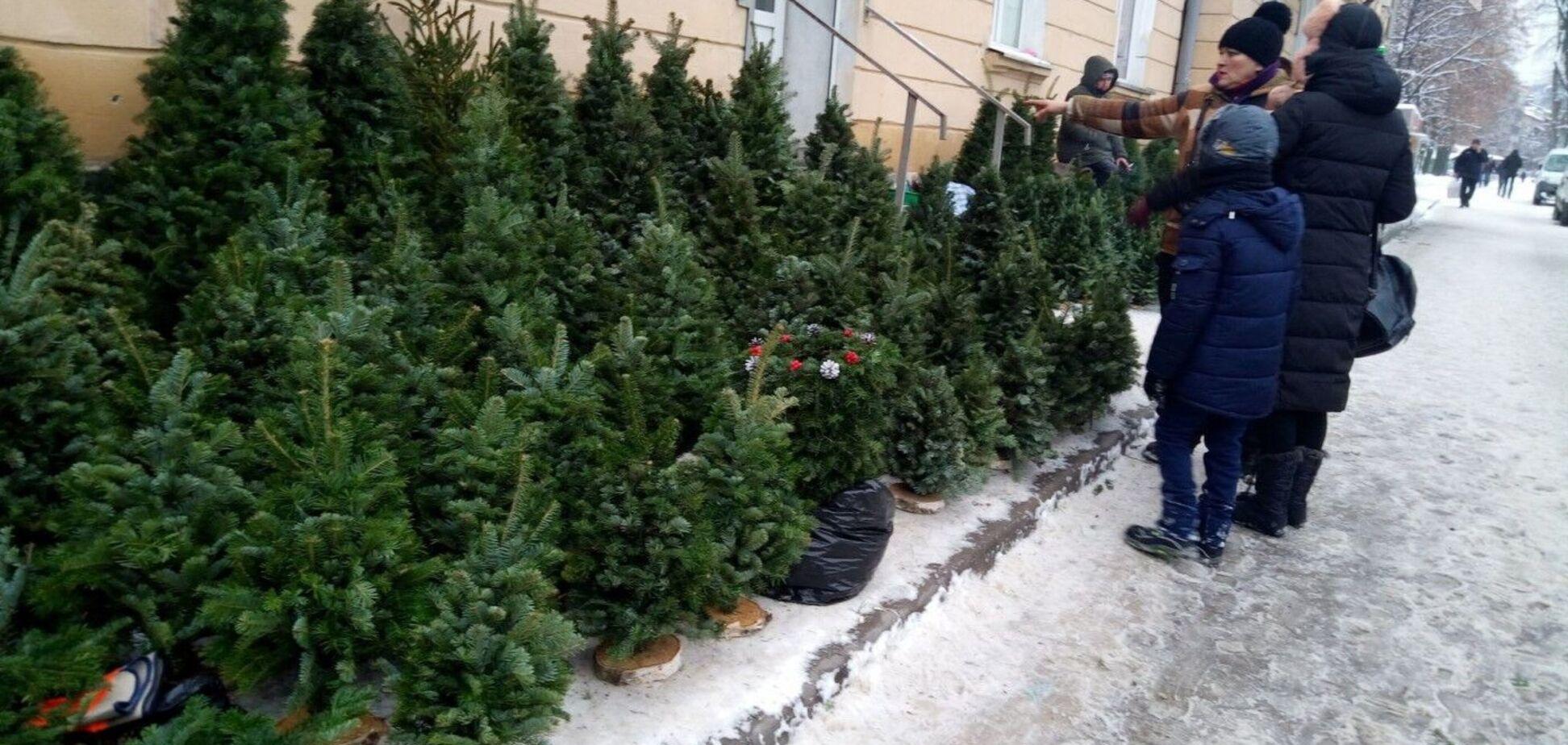 Головну новорічну ялинку у Вінниці встановлювати не будуть