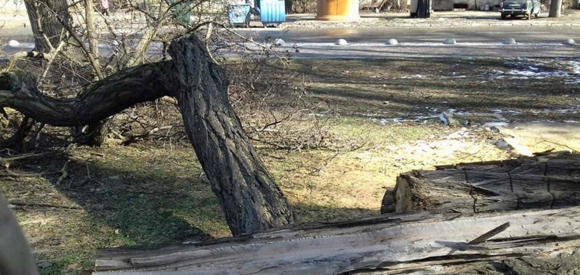 В Одесі на проїжджу частину впало дерево