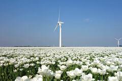 В Італії створять відразу кілька масштабних електростанцій на енергії вітру