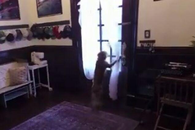 Відео зустрічі астронавтки й собаки зворушило мережу