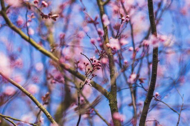Весна-2020 прийде в Україну з дощами і травневою температурою