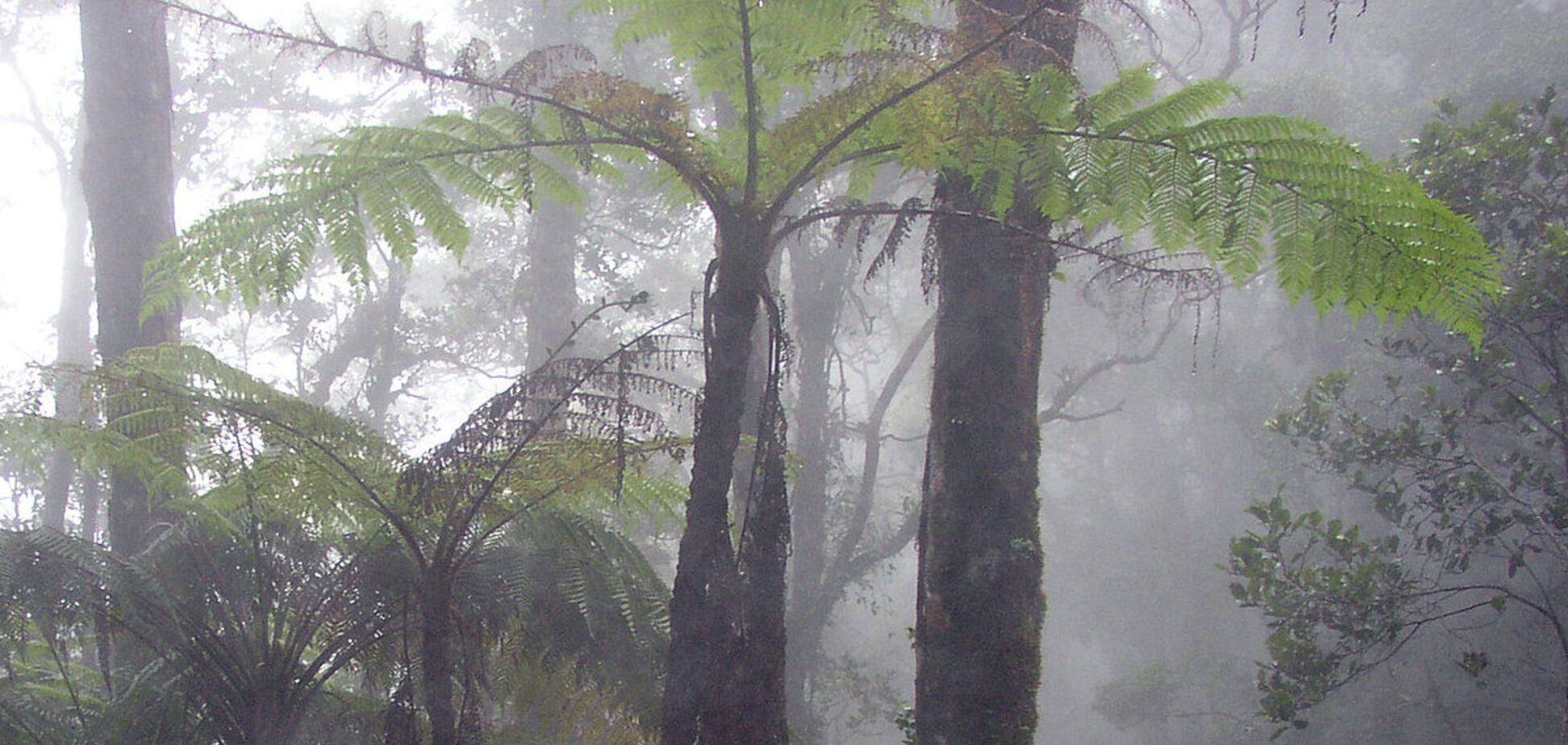 Вчені навчилися видобувати 'зелену' енергію з вологого повітря