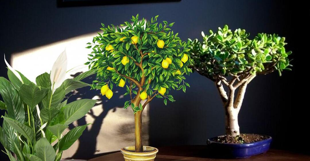 Убийцы вирусов: эксперт рассказала, какие растения нужно держать в доме