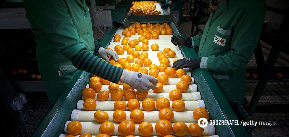 Апельсини з хробаками заполонили магазини в Україні: як правильно вибрати фрукт