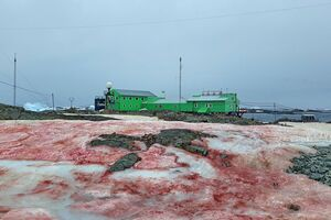 Українську антарктичну станцію оточив 'кривавий сніг': моторошні фото