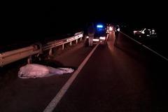 Вискочили з темряви: за один вечір у Черкасах трапились дві страшних аварії. Фото