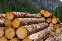 Контрабанда леса: фирму сына Луценко уличили в крупной схеме