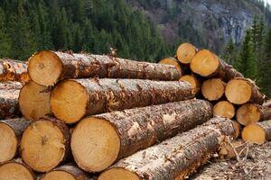Контрабанда лісу: фірму сина Луценка викрили в масштабній схемі