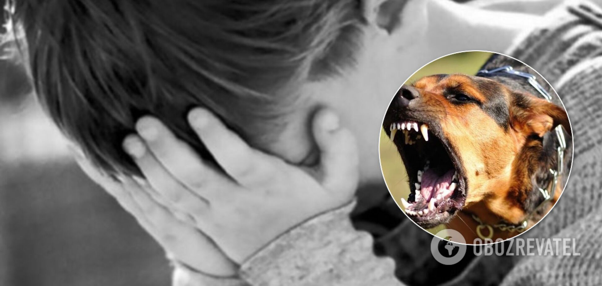 У Дніпрі собака напав на дитину біля школи: у мережі обурені