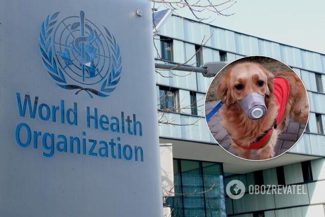 В ВОЗ считают, что коронавирус могут переносить домашние животные