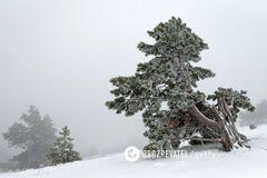 Зима вернется в Украину в марте: синоптик пообещал до 15° мороза