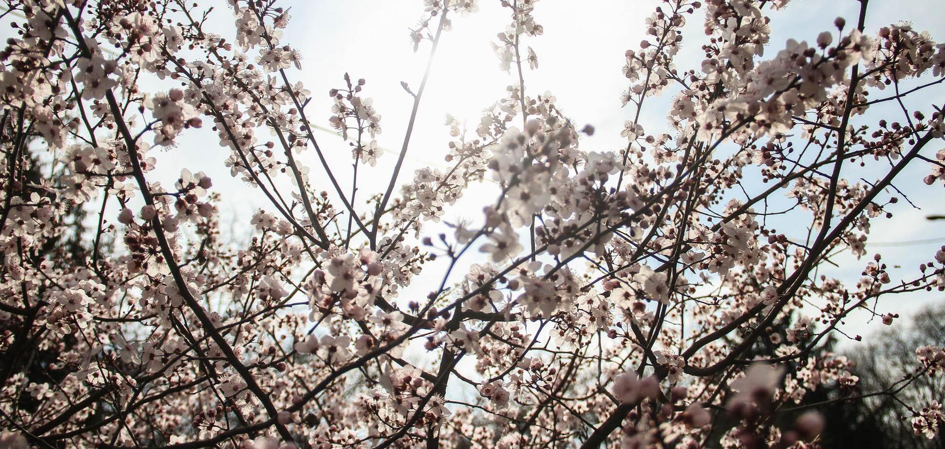 Якою буде погода в Одесі 12 березня