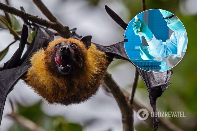 В Ухане изучали коронавирус на летучих мышах еще в 2018 году