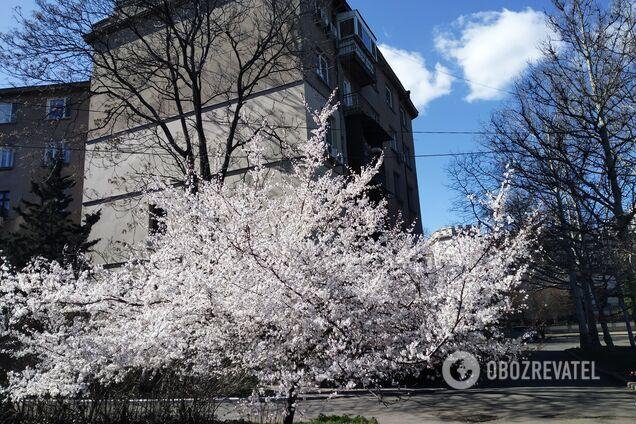 Весна в Одесі