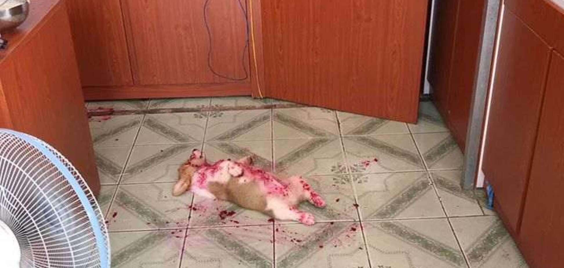 Щенок-звезда Instagram в луже крови напугал сеть: развязка оказалась неожиданной. Фото
