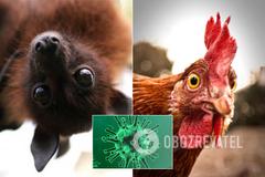 Заражение через еду: Минздрав опроверг новый фейк о коронавирусе