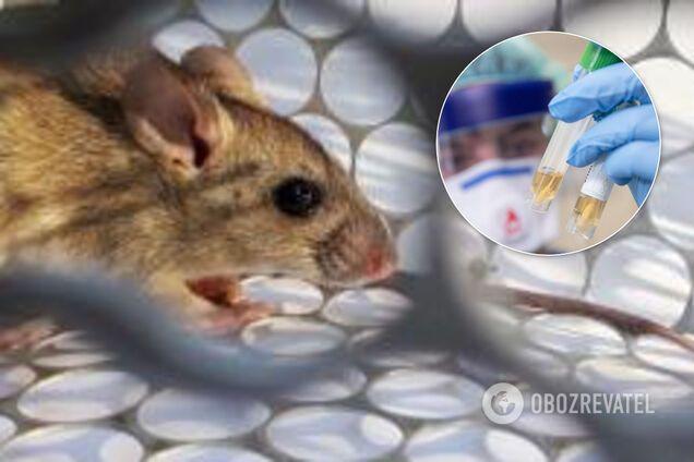 В Китае умер первый человек от нового хантавируса, 32 – на карантине