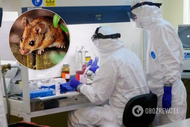 У Китаї зафіксовано першу смерть від хантавірусу
