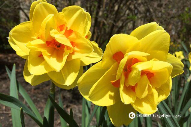 Гороскоп на 27 березня: час для особистого життя Раків, Левів і Водоліїв