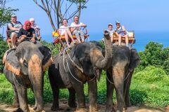 У Таїланді через коронавірус звільнили слонів