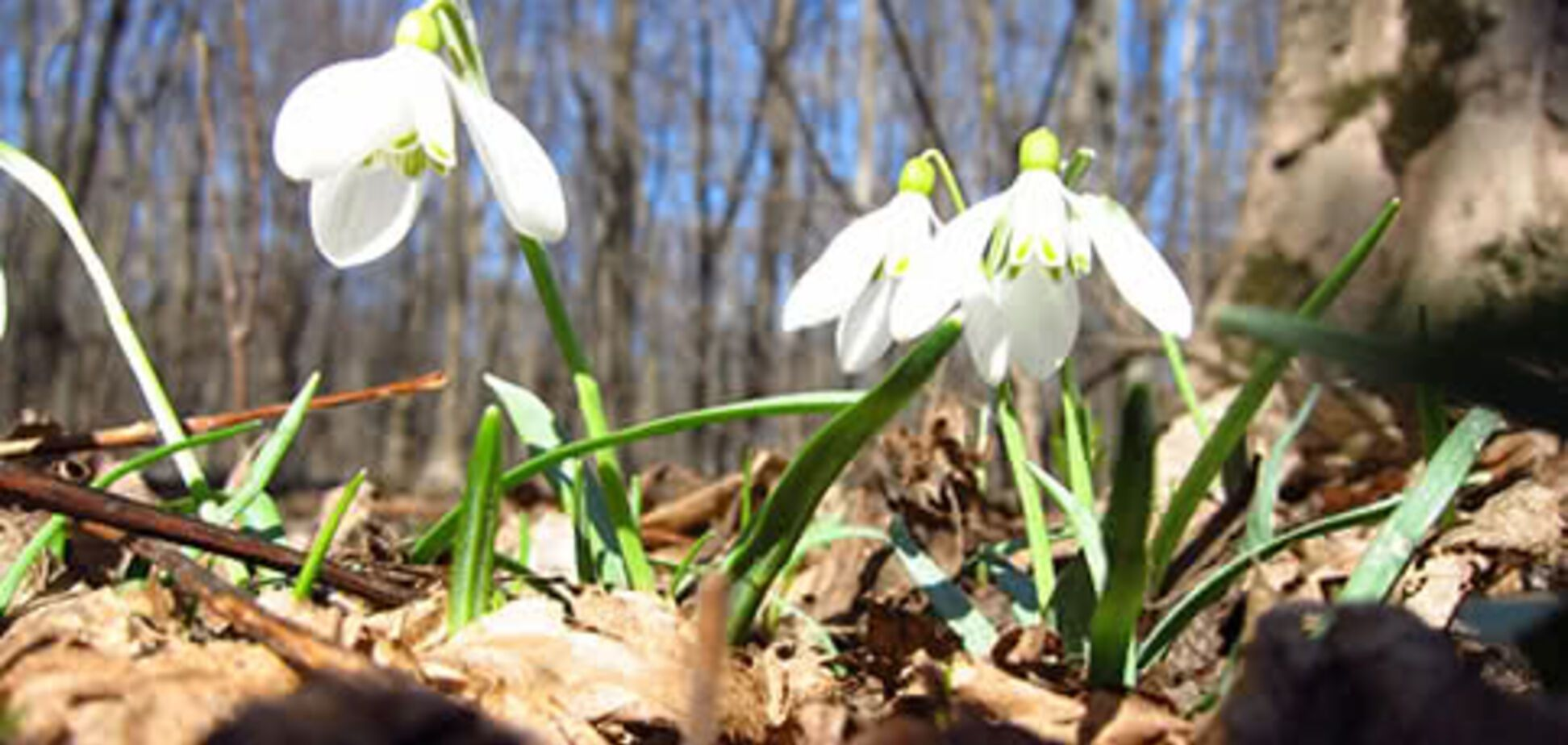 З'явився прогноз погоди на весну в Україні: думки синоптиків розділилися