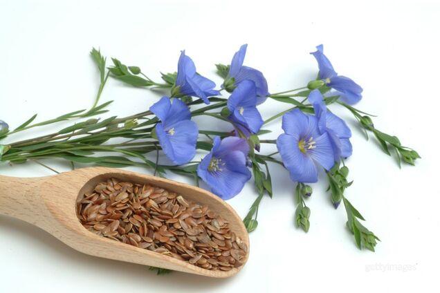 Насіння льону: чому воно обов'язково повинне бути в нашому раціоні