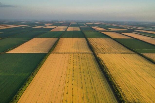 В Раде рассказали о масштабах теневого рынка земли в Украине