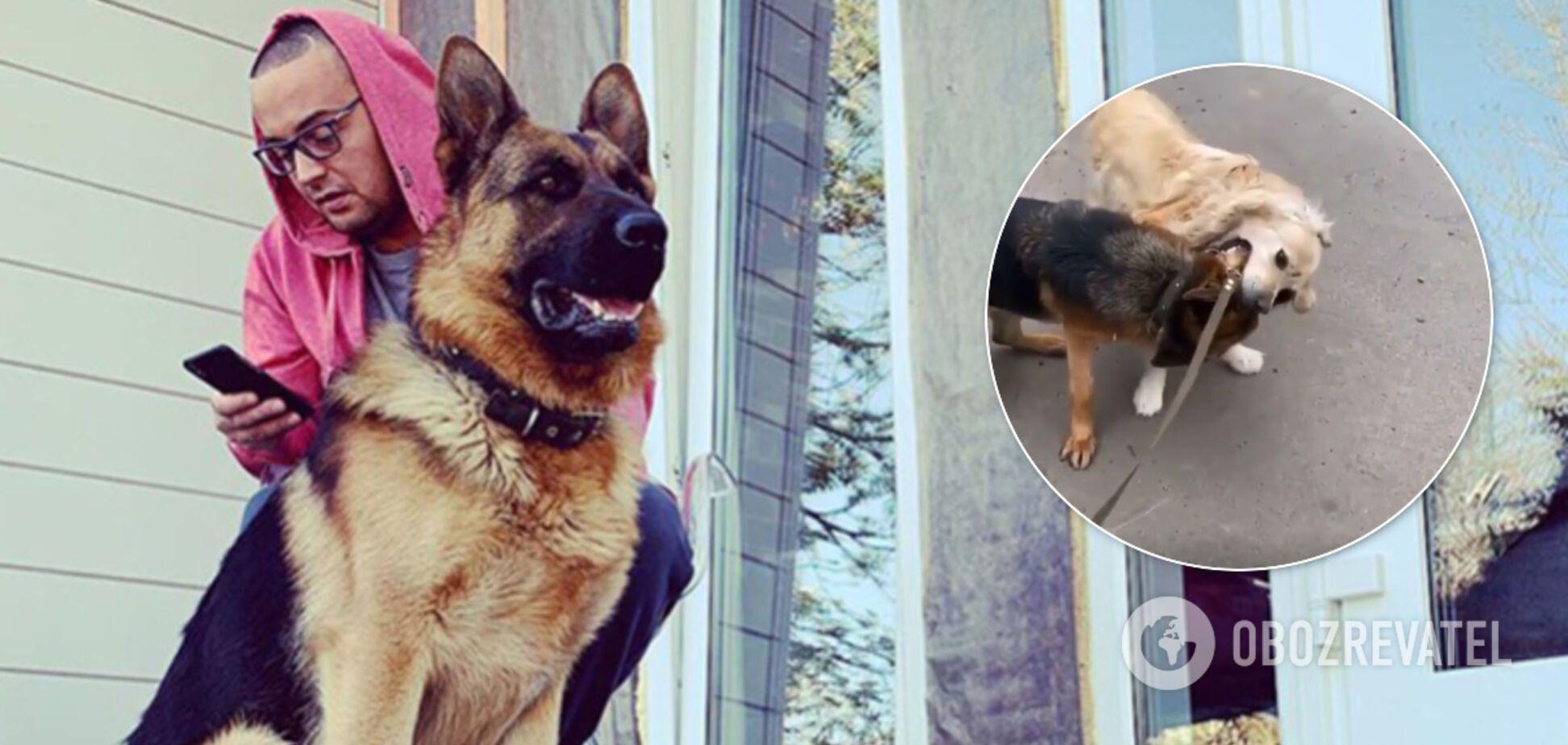 Гуф устроил жестокие собачьи бои и снял их на камеру: рэпера призвали наказать за 'живодерство'