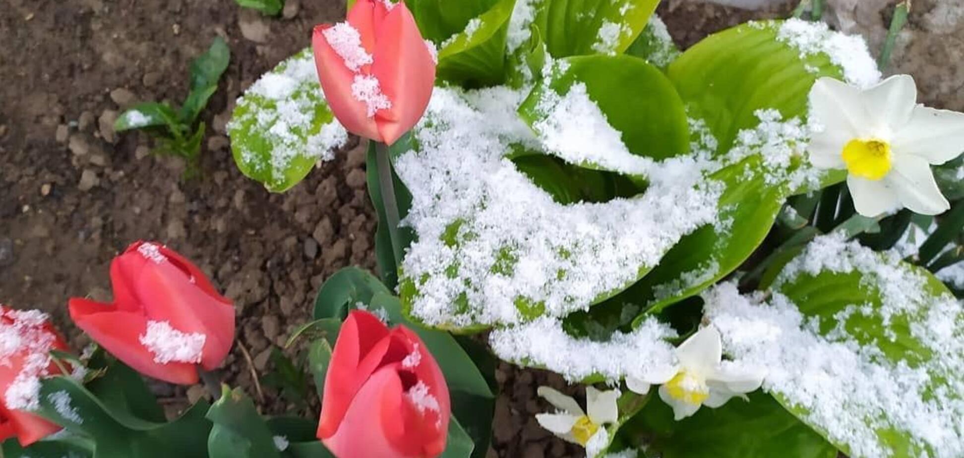 В Одеській області випав весняний сніг
